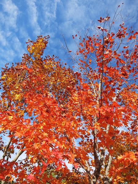 穴の川 ハーブの小径 紅葉 紅葉