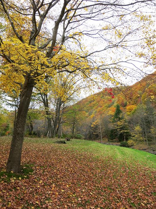 すずらん丘陵公園 紅葉