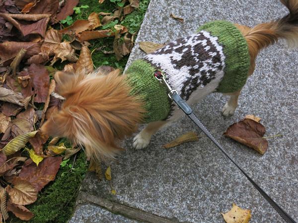 茶太郎 セーター