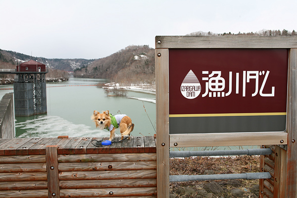 恵庭渓谷 漁川ダム 茶太郎