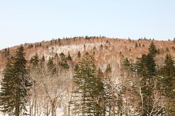 定山渓レイクライン 雪