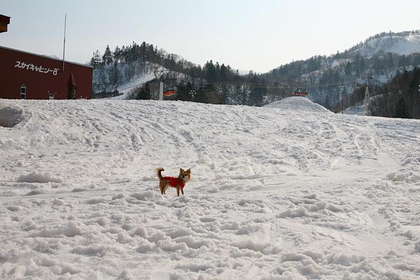 定山渓レイクライン 札幌国際スキー場 茶太郎