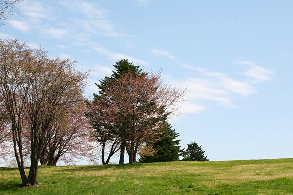真駒内公園 春