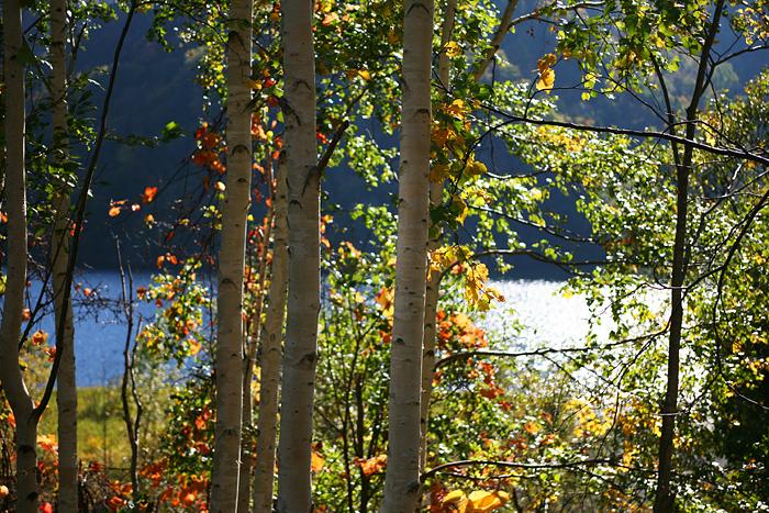 さっぽろ湖 展望台 紅葉 木漏れ日