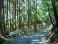 130815ガリバー旅行村斜面の遊具群1