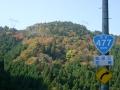 131116国道477号から山の色づき