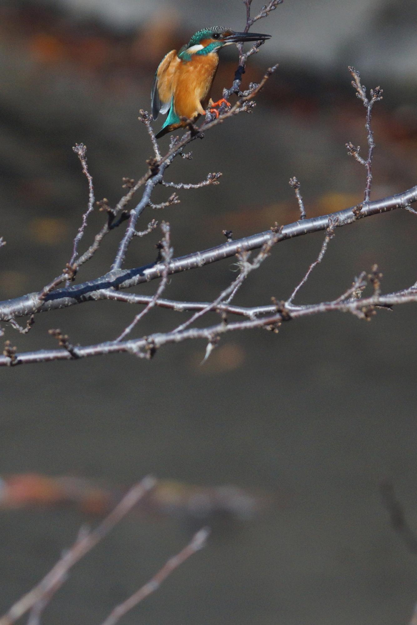 ♂ 2013/12/01 赤白鉄塔前にて(2/2)