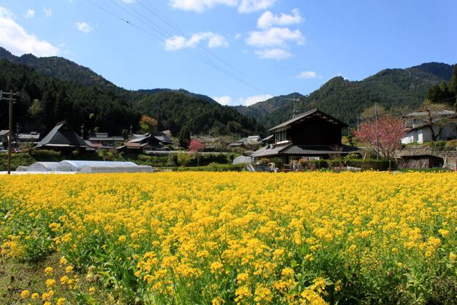 oohara-3669.jpg