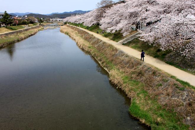 sakura-9882.jpg