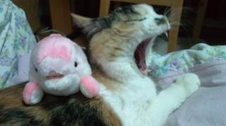 イルカと猫2