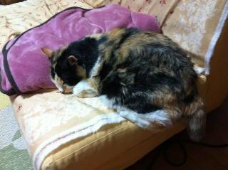 端っこで寝てる猫