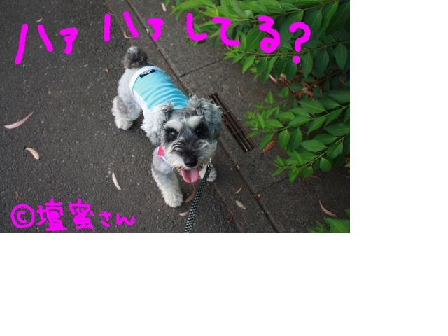 snap_baron20101214_201375143454.jpg