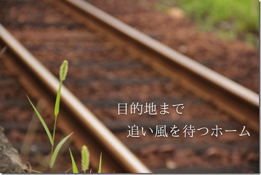 IMG_1298