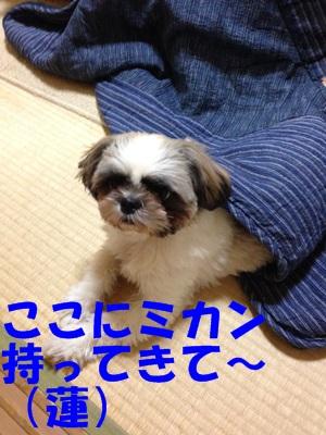 IMG_0291-B.jpg