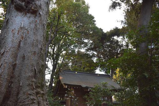 025-神社