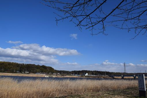 074-印旛沼