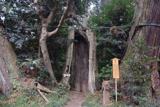 028-三本杉