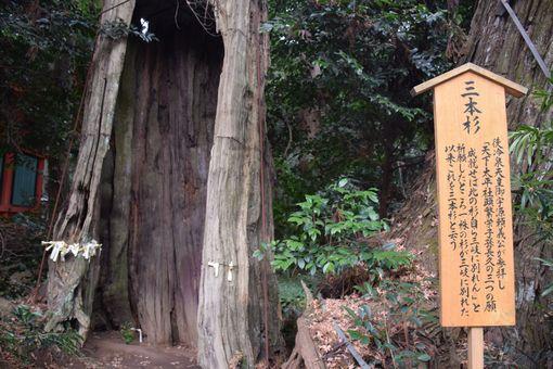 031-三本杉説明