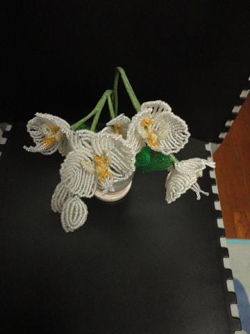 ミニ胡蝶蘭の白③