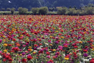 花の都公園の花