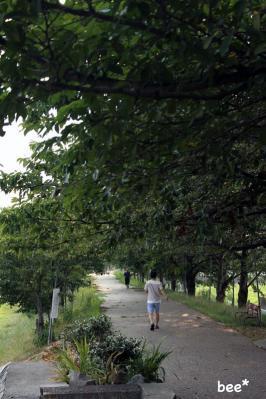 近所の散歩をする主人
