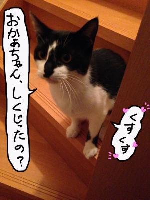 IMG_25471.jpg