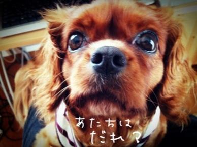 image_20130327110932.jpg