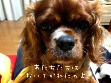 image_20130408180957.jpg