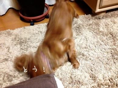image_20130408181005.jpg