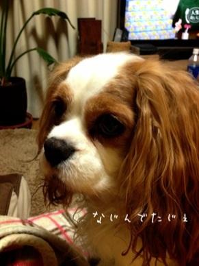 image_20130408181030.jpg