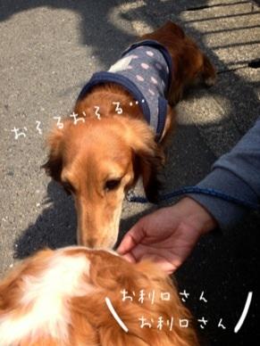 image_20130505064236.jpg