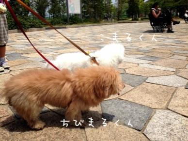 image_20130519143923.jpg