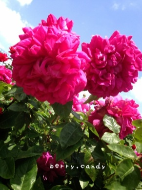 image_20130519144013.jpg