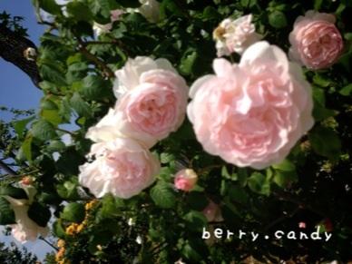 image_20130519144022.jpg