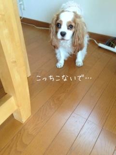 image_20130523153028.jpg