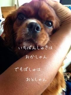 image_20130602100620.jpg