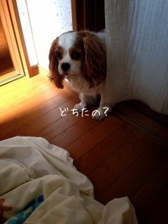 image_20130605085705.jpg