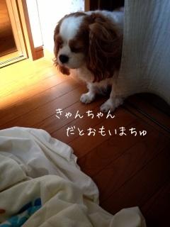 image_20130605085707.jpg