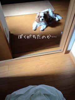 image_20130605085708.jpg