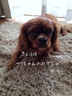 image_20130609101221.jpg