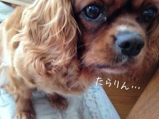 image_20130620085224.jpg