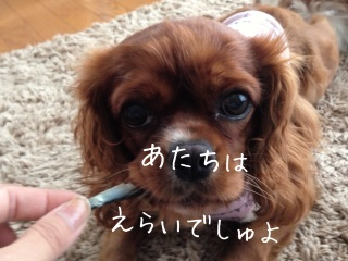 image_20130626151718.jpg