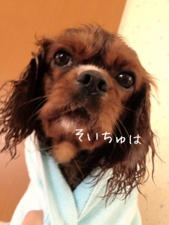 image_20130701110422.jpg