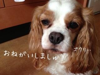 image_20130702184431.jpg