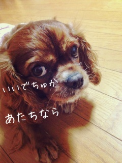 image_20130705185815.jpg
