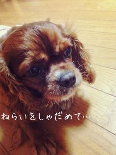 image_20130705185817.jpg