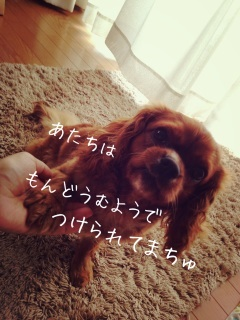 image_20130706133416.jpg