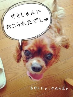 image_20130725191030.jpg
