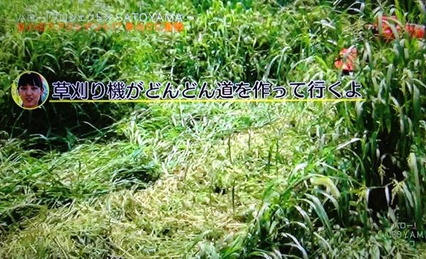 IMG_8180_R_2013090814510020d.jpg