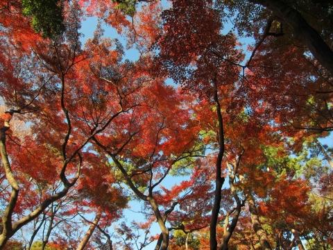 殿ケ谷戸庭園7